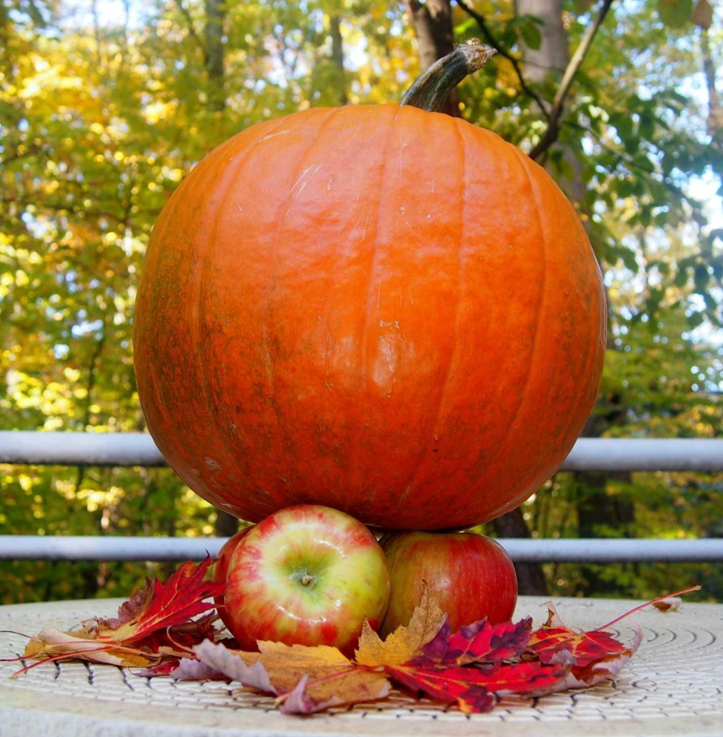 Pumpkin apple compressed